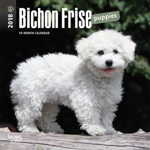Bichon Frise Puppies 2018 7 X 7 Inch Monthly Mini Wall Calendar