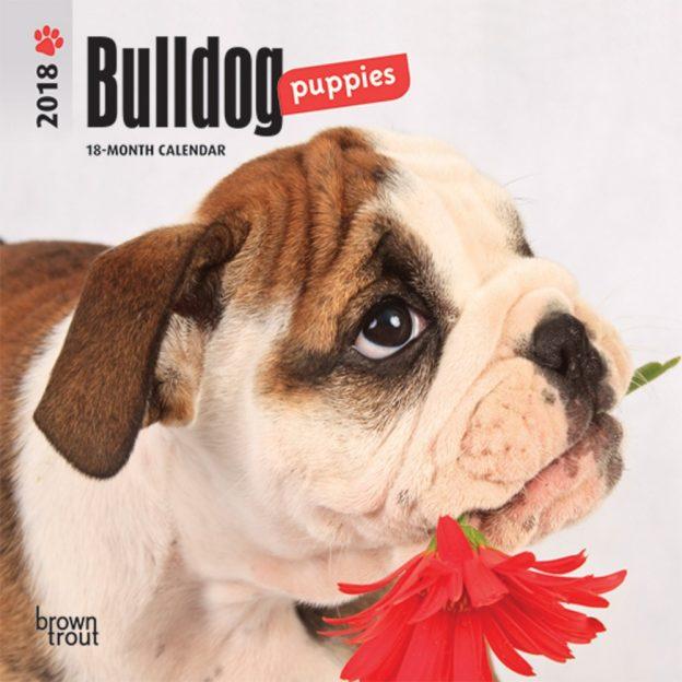 Bulldog Puppies 2018 7 X 7 Inch Monthly Mini Wall Calendar