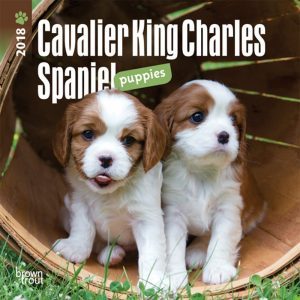 Cavalier King Charles Spaniel Puppies 2018 7 X 7 Inch Monthly Mini Wall Calendar