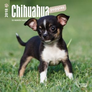 Chihuahua Puppies 2018 7 X 7 Inch Monthly Mini Wall Calendar