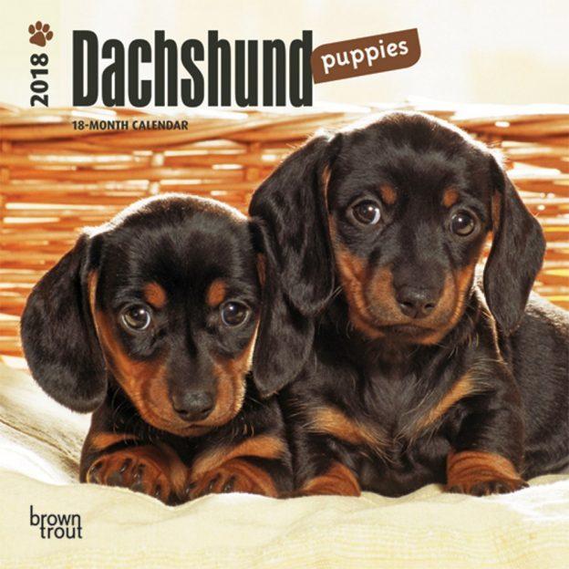 Dachshund Puppies 2018 7 X 7 Inch Monthly Mini Wall Calendar