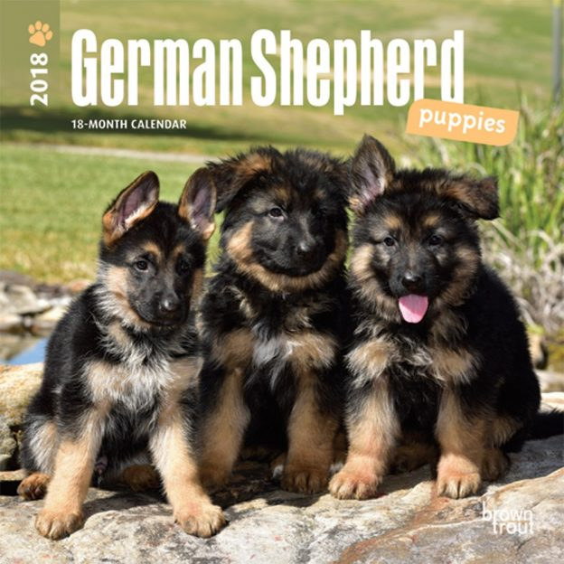 German Shepherd Puppies 2018 7 X 7 Inch Monthly Mini Wall Calendar