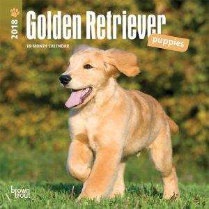 Golden Retriever Puppies 2018 7 X 7 Inch Monthly Mini Wall Calendar