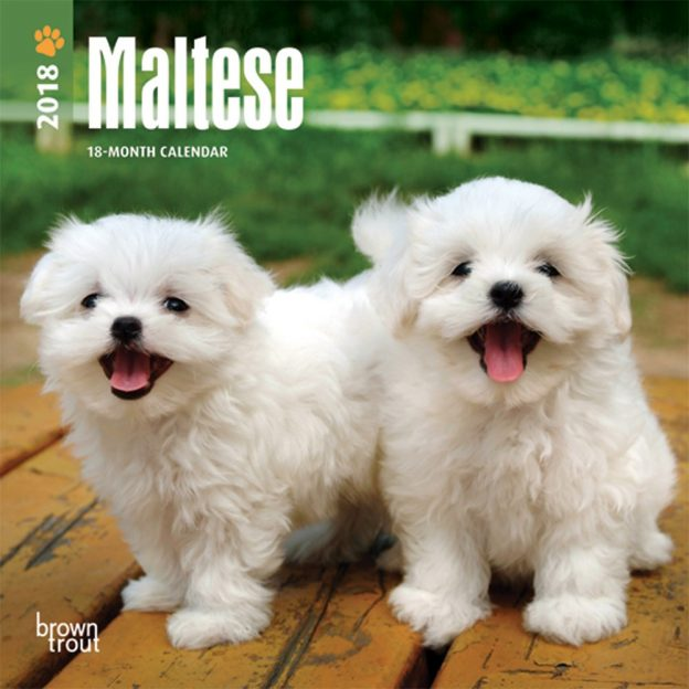 Maltese 2018 7 X 7 Inch Monthly Mini Wall Calendar