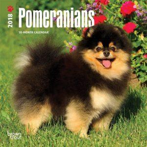 Pomeranians 2018 7 X 7 Inch Monthly Mini Wall Calendar
