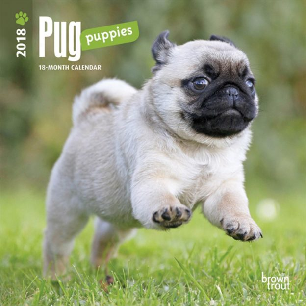 Pug Puppies 2018 7 X 7 Inch Monthly Mini Wall Calendar
