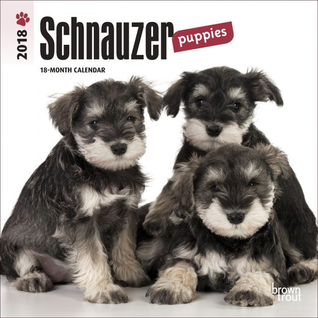 Schnauzer Puppies 2018 7 X 7 Inch Monthly Mini Wall Calendar