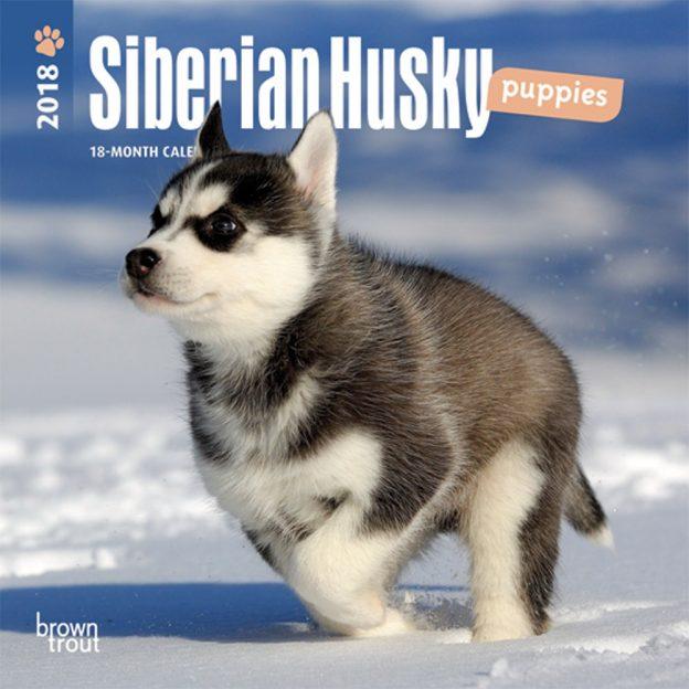 Siberian Husky Puppies 2018 7 X 7 Inch Monthly Mini Wall Calendar