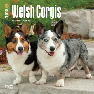 Welsh Corgis 2018 7 X 7 Inch Monthly Mini Wall Calendar