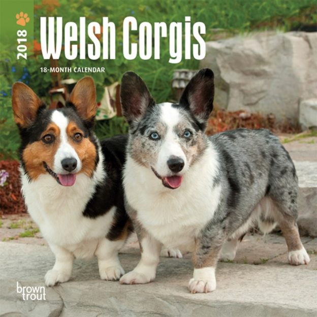Welsh Corgis 2018 7 X 7 Inch Monthly Mini Wall Calendar