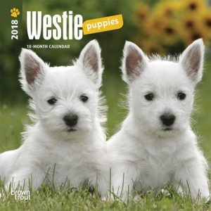 West Highland White Terrier Puppies 2018 7 X 7 Inch Monthly Mini Wall Calendar