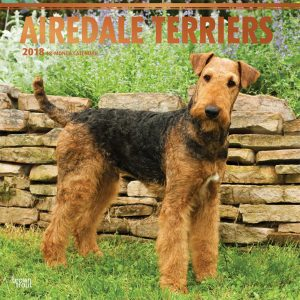 Airedale Terriers 2018 12 X 12 Inch Monthly Square Wall Calendar With Foil Stamped Cover