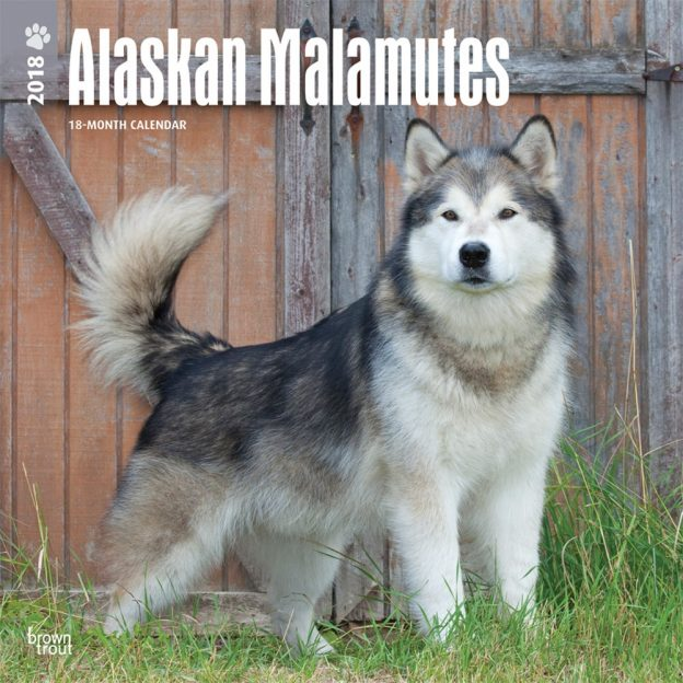 Alaskan Malamutes 2018 12 X 12 Inch Monthly Square Wall Calendar