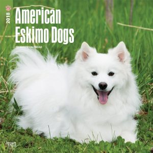 American Eskimo Dogs 2018 12 X 12 Inch Monthly Square Wall Calendar