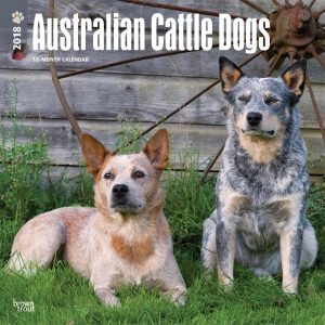 Australian Cattle Dogs 2018 12 X 12 Inch Monthly Square Wall Calendar