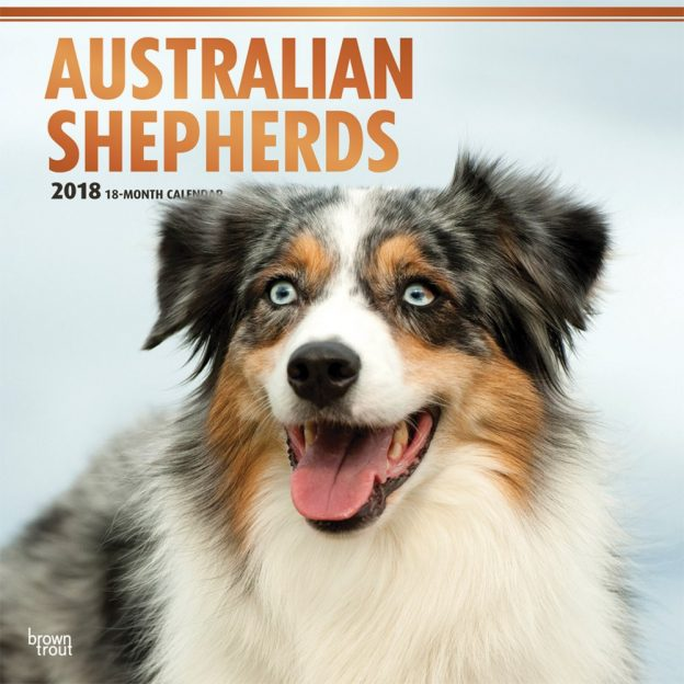 Australian Shepherds 2018 12 X 12 Inch Monthly Square Wall Calendar With Foil Stamped Cover