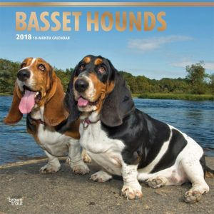 Basset Hounds 2018 12 X 12 Inch Monthly Square Wall Calendar With Foil Stamped Cover