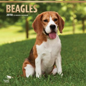 Beagles 2018 12 X 12 Inch Monthly Square Wall Calendar With Foil Stamped Cover
