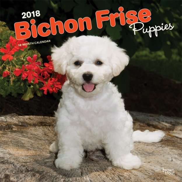 Bichon Frise Puppies 2018 12 X 12 Inch Monthly Square Wall Calendar