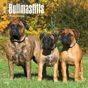 Bullmastiffs 2018 12 X 12 Inch Monthly Square Wall Calendar