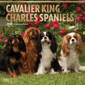 Cavalier King Charles Spaniels 2018 12 X 12 Inch Monthly Square Wall Calendar With Foil Stamped Cover