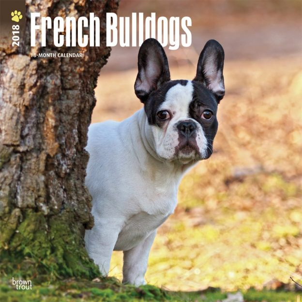 French Bulldogs 2018 12 X 12 Inch Monthly Square Wall Calendar