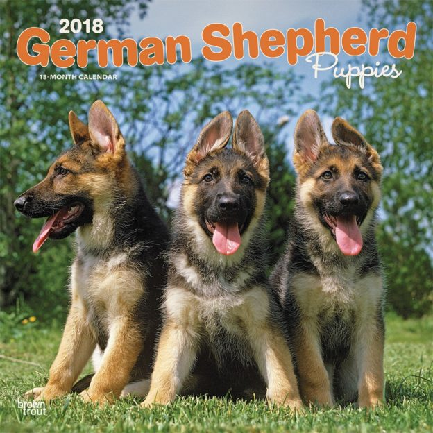 German Shepherd Puppies 2018 12 X 12 Inch Monthly Square Wall Calendar
