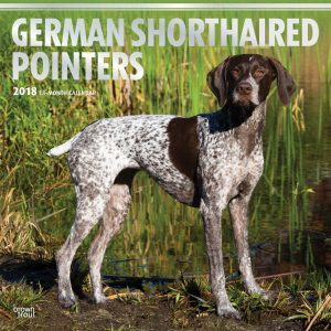 German Shorthaired Pointers 2018 12 X 12 Inch Monthly Square Wall Calendar With Foil Stamped Cover