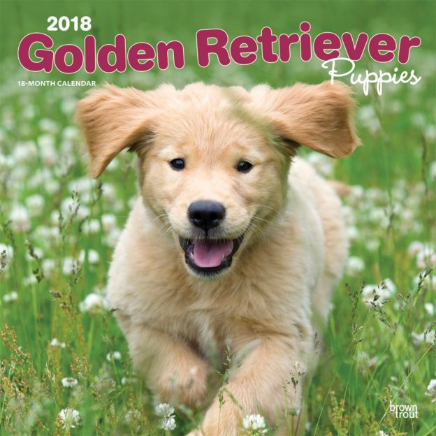 Golden Retriever Puppies 2018 12 X 12 Inch Monthly Square Wall Calendar