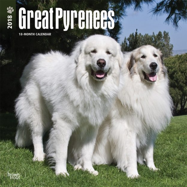 Great Pyrenees 2018 12 X 12 Inch Monthly Square Wall Calendar