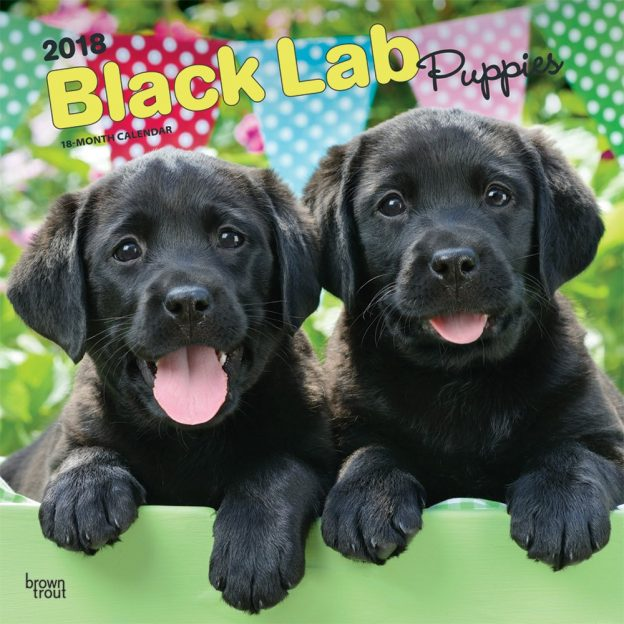 Black Labrador Retriever Puppies 2018 12 X 12 Inch Monthly Square Wall Calendar