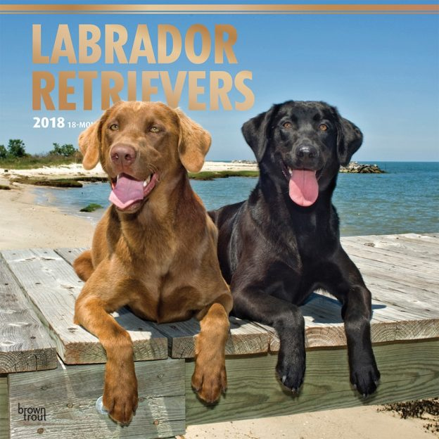 Labrador Retrievers 2018 12 X 12 Inch Monthly Square Wall Calendar With Foil Stamped Cover