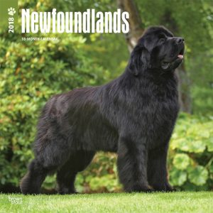 Newfoundlands 2018 12 X 12 Inch Monthly Square Wall Calendar