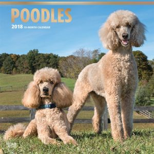 Poodles 2018 12 X 12 Inch Monthly Square Wall Calendar With Foil Stamped Cover