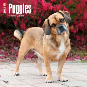 Puggles 2018 12 X 12 Inch Monthly Square Wall Calendar