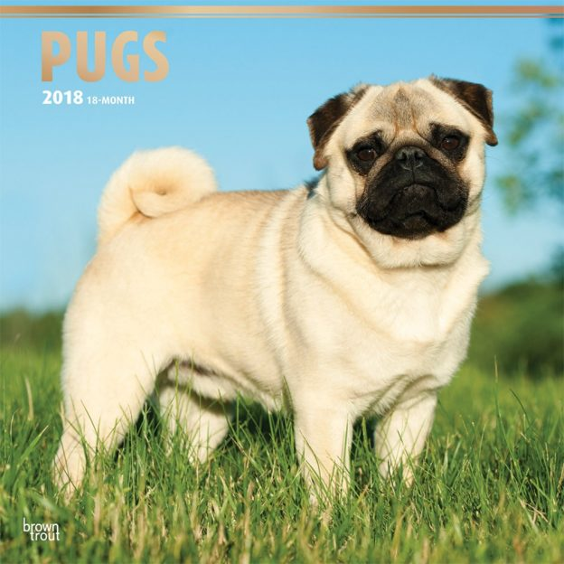 Pugs 2018 12 X 12 Inch Monthly Square Wall Calendar With Foil Stamped Cover