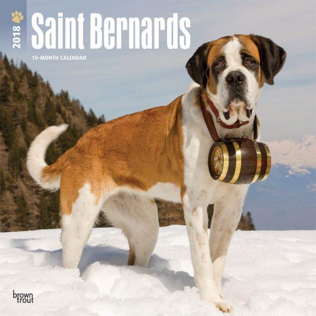 Saint Bernards 2018 12 X 12 Inch Monthly Square Wall Calendar