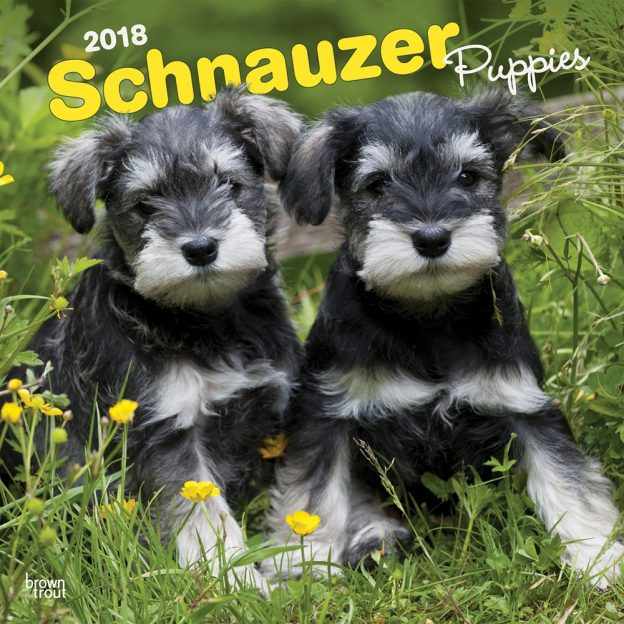 Schnauzer Puppies 2018 12 X 12 Inch Monthly Square Wall Calendar