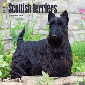 Scottish Terriers 2018 12 X 12 Inch Monthly Square Wall Calendar