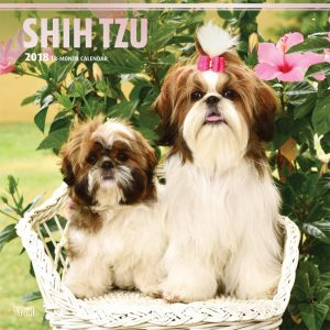 Shih Tzu 2018 12 X 12 Inch Monthly Square Wall Calendar With Foil Stamped Cover
