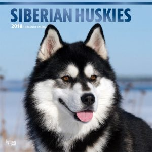 Siberian Huskies 2018 12 X 12 Inch Monthly Square Wall Calendar With Foil Stamped Cover