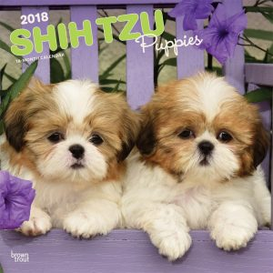 Shih Tzu Puppies 2018 12 X 12 Inch Monthly Square Wall Calendar
