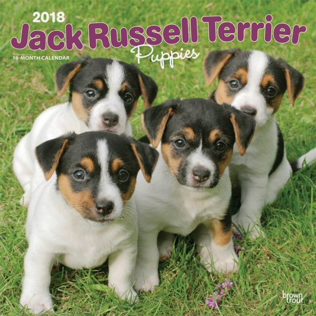 Jack Russell Terrier Puppies 2018 12 X 12 Inch Monthly Square Wall Calendar