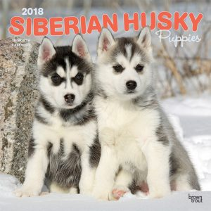 Siberian Husky Puppies 2018 12 X 12 Inch Monthly Square Wall Calendar