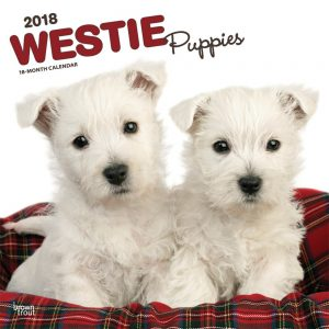 West Highland White Terrier Puppies 2018 12 X 12 Inch Monthly Square Wall Calendar
