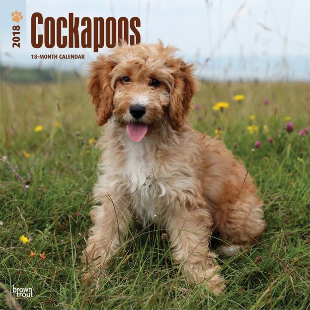 Cockapoos 2018 12 X 12 Inch Monthly Square Wall Calendar