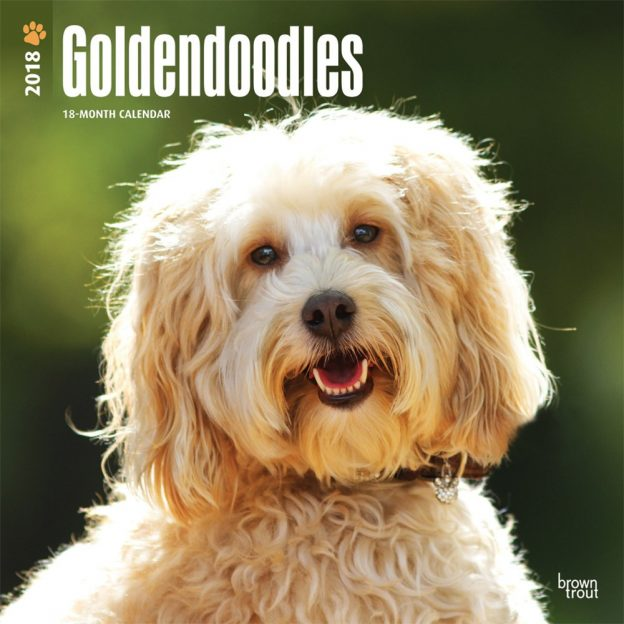 Goldendoodles 2018 12 X 12 Inch Monthly Square Wall Calendar