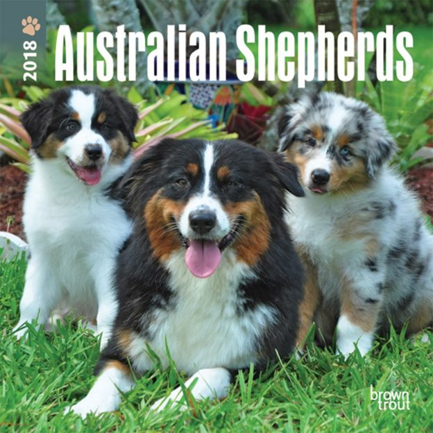 Australian Shepherds 2018 7 X 7 Inch Monthly Mini Wall Calendar