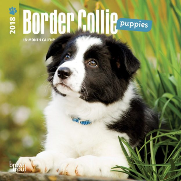 Border Collie Puppies 2018 7 X 7 Inch Monthly Mini Wall Calendar
