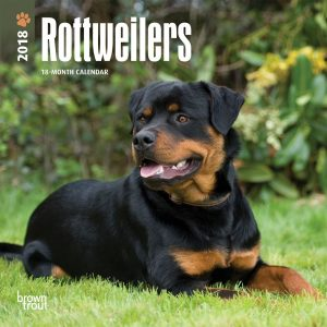 Rottweilers 2018 7 X 7 Inch Monthly Mini Wall Calendar